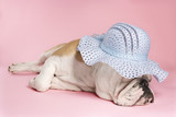 sleeping english bulldog wearing bonnet. poster
