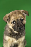 Mixed breed puppy. poster