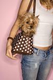 Donna con cane in borsa.