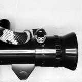California Kingsnake on old movie camera lens. poster