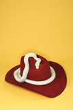 Texas Rat Snake on cowboy hat. poster