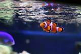 fish in aquarium poster