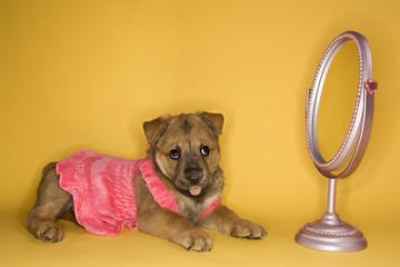 puppy wearing dress