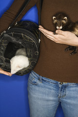 ferrets held by woman.