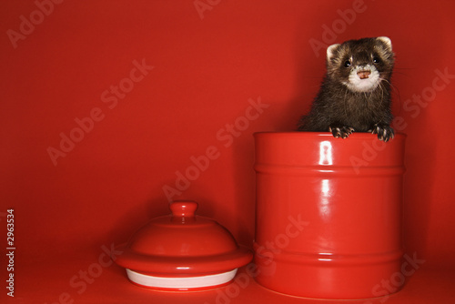 ferret in jar.
