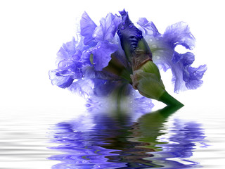 iris reflection