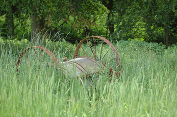 rusted wagon in a field