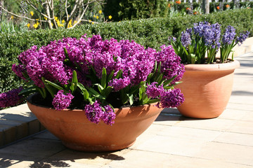 pflanzenschalen auf der terrasse
