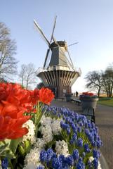 mdg-windmill-02