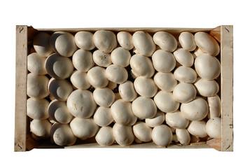 cassetta di funghi champignon