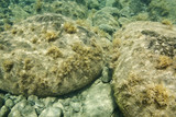 Underwater view of rocks in Maui, Hawaii. poster