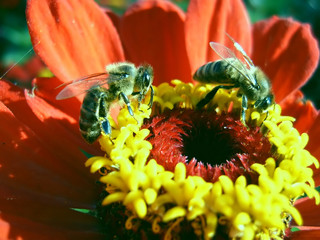 two bees on flower
