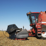combine harvesting soybean field. poster