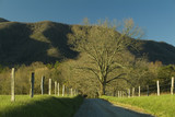 spring trees and meadow in cades cove, tn poster
