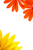 blank white page decorated with flower details