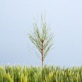 sapling growing in strip of artificial green grass. poster