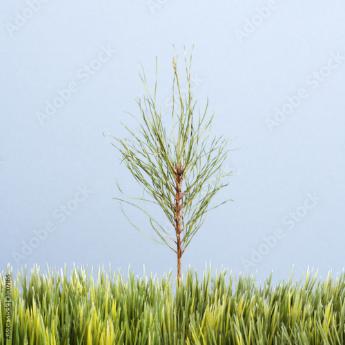 poster of sapling growing in strip of artificial green grass.