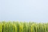 strip of artificial green grass. poster