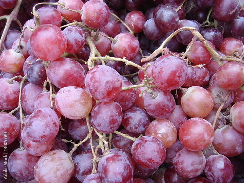 a twig of grapes