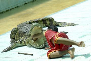 crocodile-show