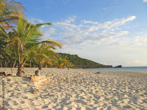 tropical caraibe beach with palm trees and white sand, roatan is