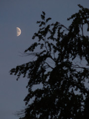half moon with tree silhouette portrait