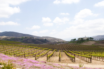 temecula wine country in spring