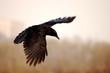 roleta: raven in the sky