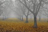 walnut grove in fog poster