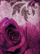 purple rose background
