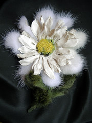 fashion accessory brooch chamomile