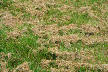 green and yellow dried catted grass on a field