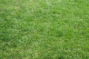 a beautifully cut field