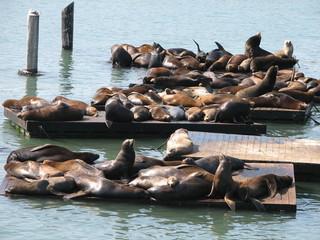 seals basking in the sunshine