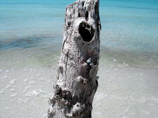 snails on tree
