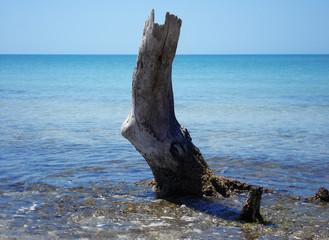 tree trunk in water