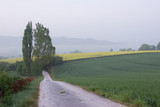 towards the rapeseed fields poster
