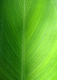 green green leaf of home