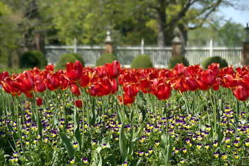 red tulips and wild flowers
