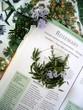medicinal herbs -rosmarinus officinalis