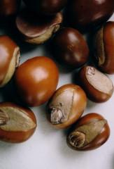 shea nuts 2