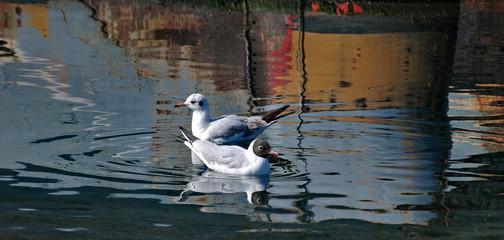 two gulls6