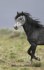wild horse walking through the grass