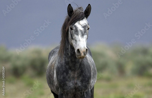 wild horse standing alone in the praire