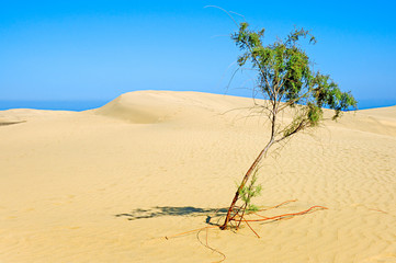 lonely tree in desert.