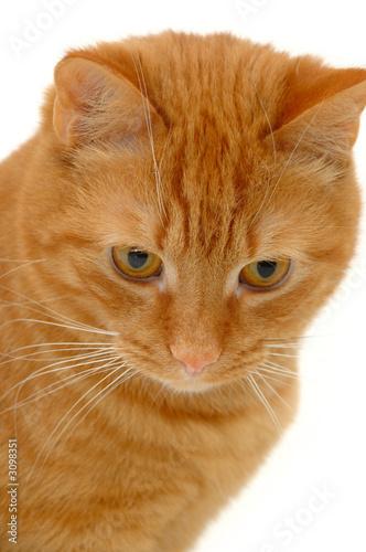 Leinwanddruck Bild sweet kitten