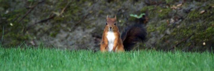 regard d'écureuil