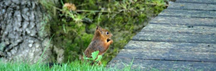 l'écureuil et le pont