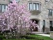 magnolia tree and large stone house