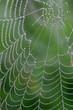 cobweb on the rainy morning